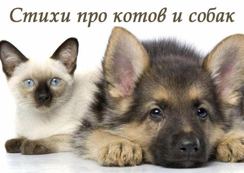 Стихи про котов и собак